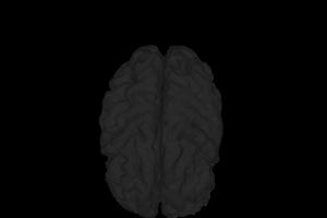 Saúde cerebro açaí